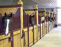 horse stall fronts